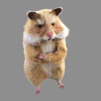 cartoon hamster 3D models
