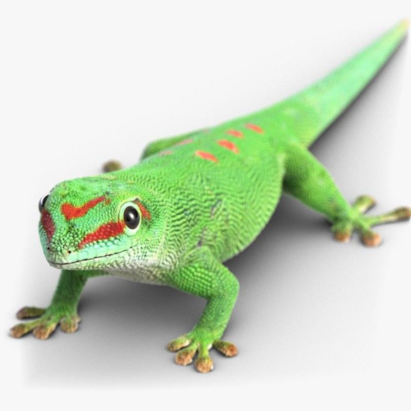 Lizard-1chk247.jpg