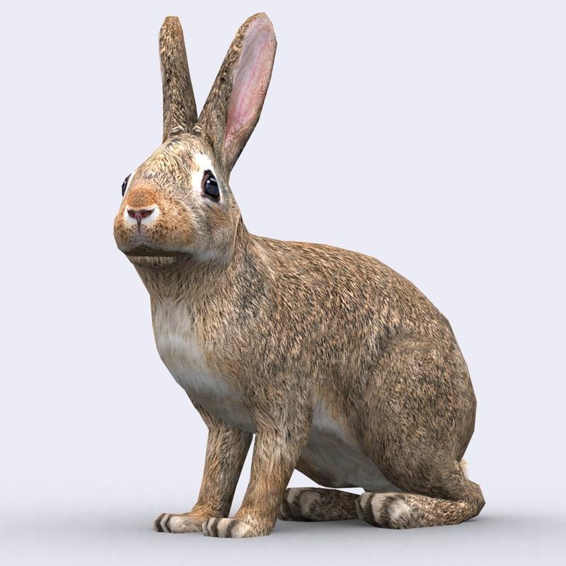 3DRT - Wild Animals - Hare