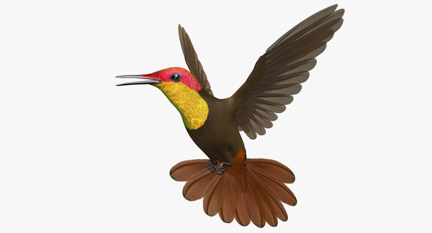 "Chrysolampis Mosquitus ""Ruby-Topaz Hummingbird"""