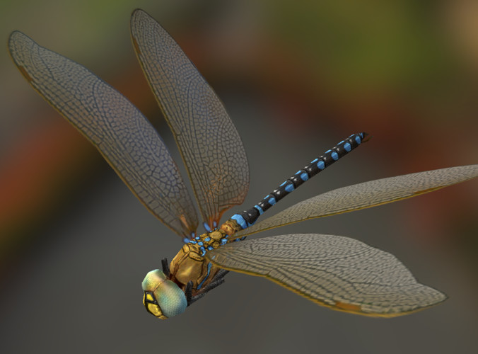 Img_Insect_Dragonfly00.png