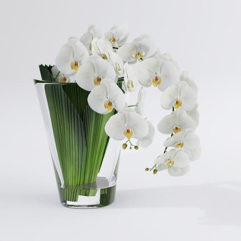 Phalaenopsis Orchid VG(1)