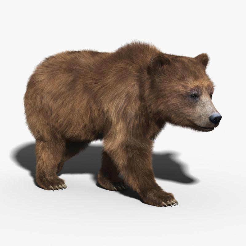 Brown Bear(FUR)(RIGGED)