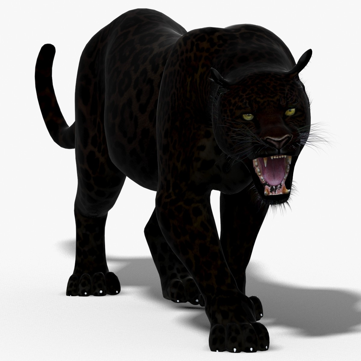 Panther-3D-model-animated-00.jpg