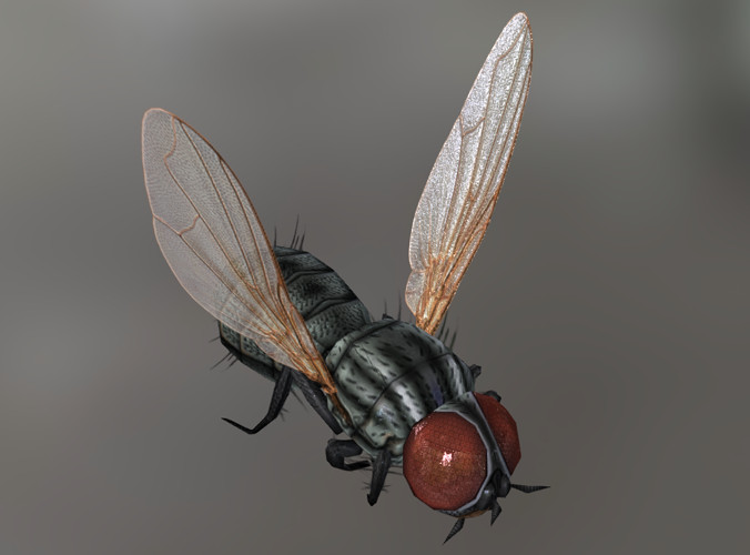 Img_Insect_Fly00.png