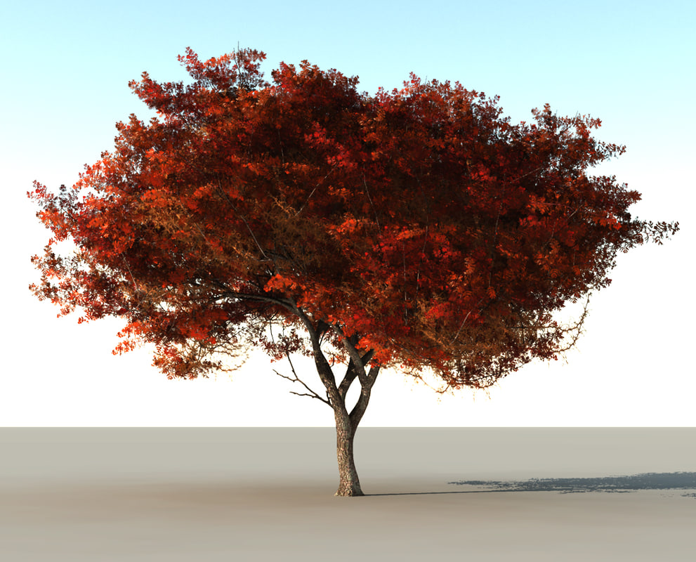 Beautiful red tree