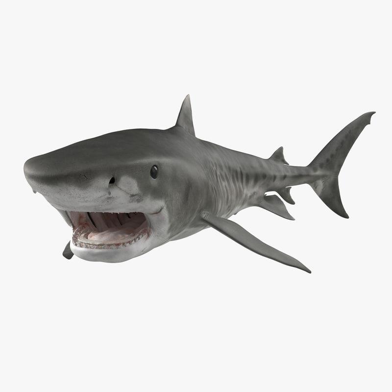3d model of Tiger Shark 01.jpg