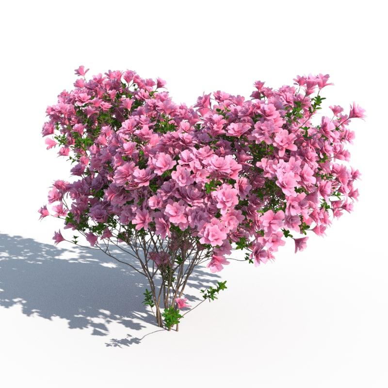 3d max azalea japonica