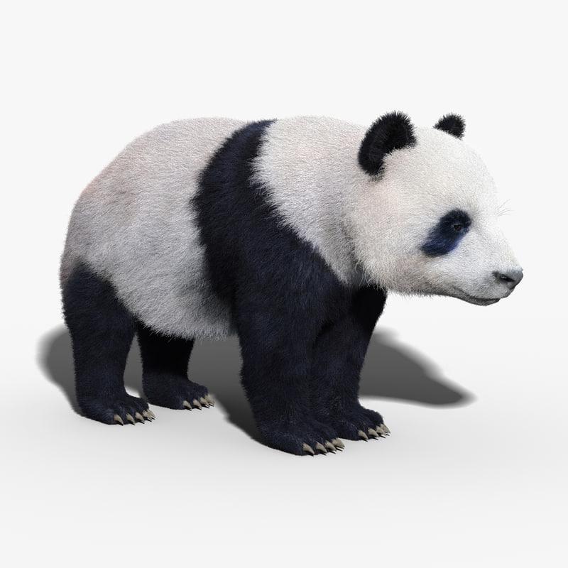 Panda Bear(FUR)