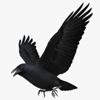crow 3D models