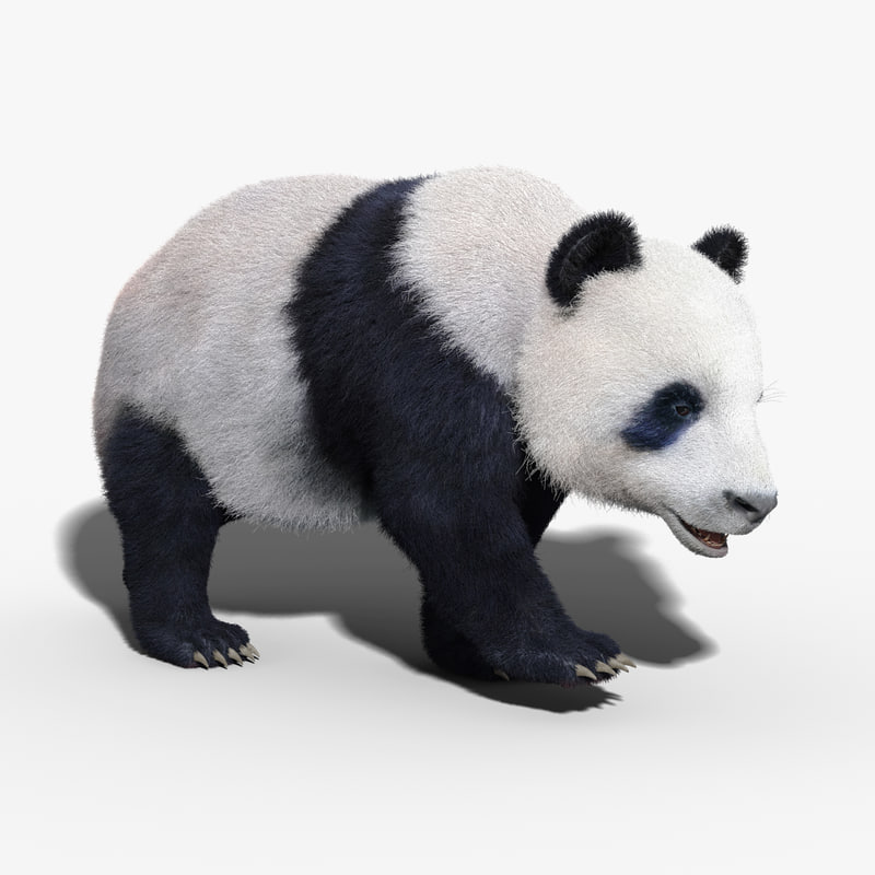 Panda Bear(FUR)(RIGGED)