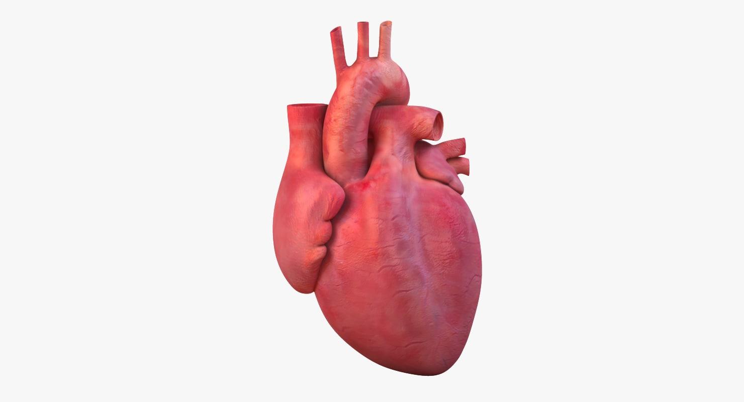 Heart_mesh_col_v01.34.png