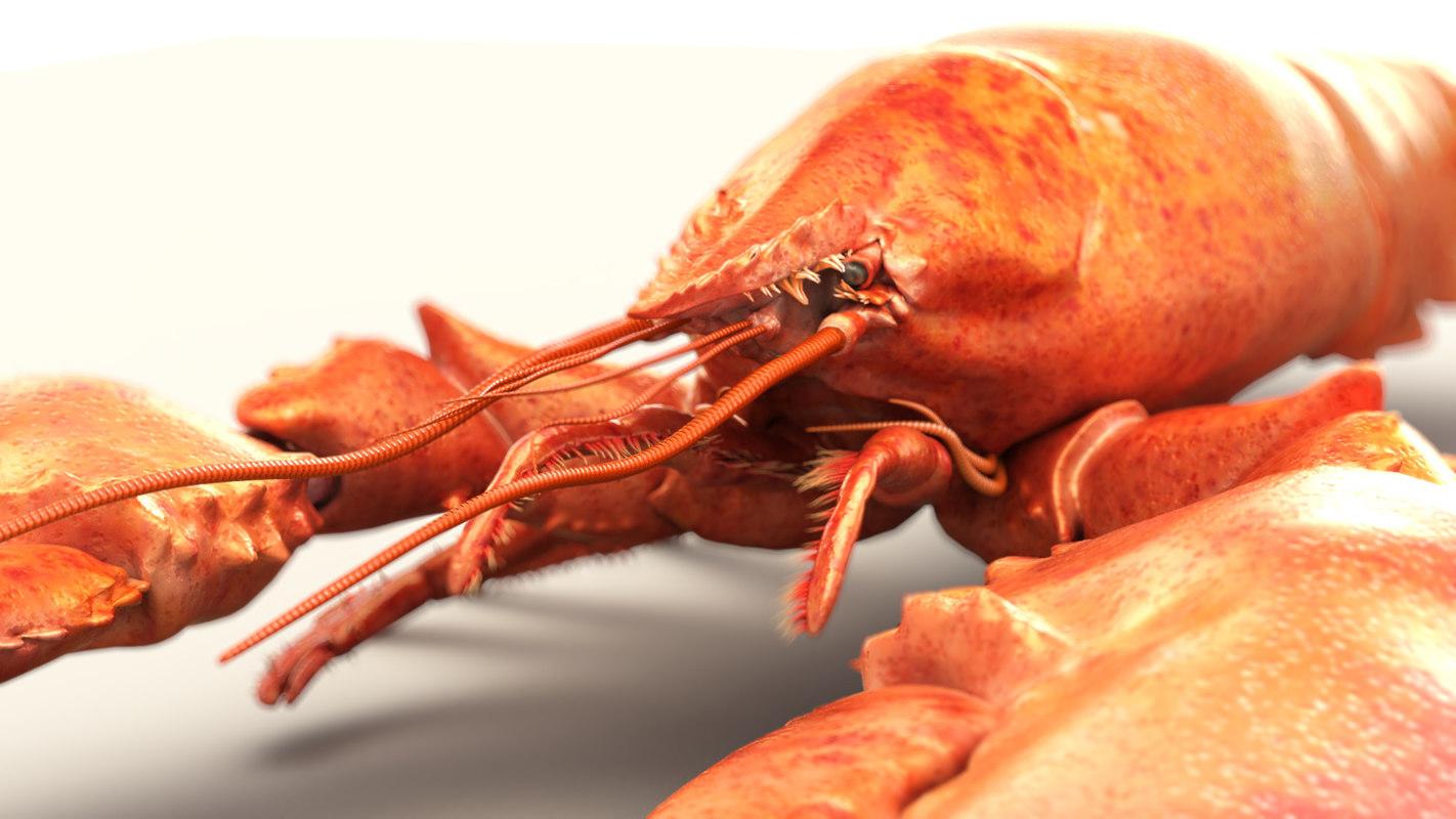 lobster_pic_thy_v022_0000.jpg