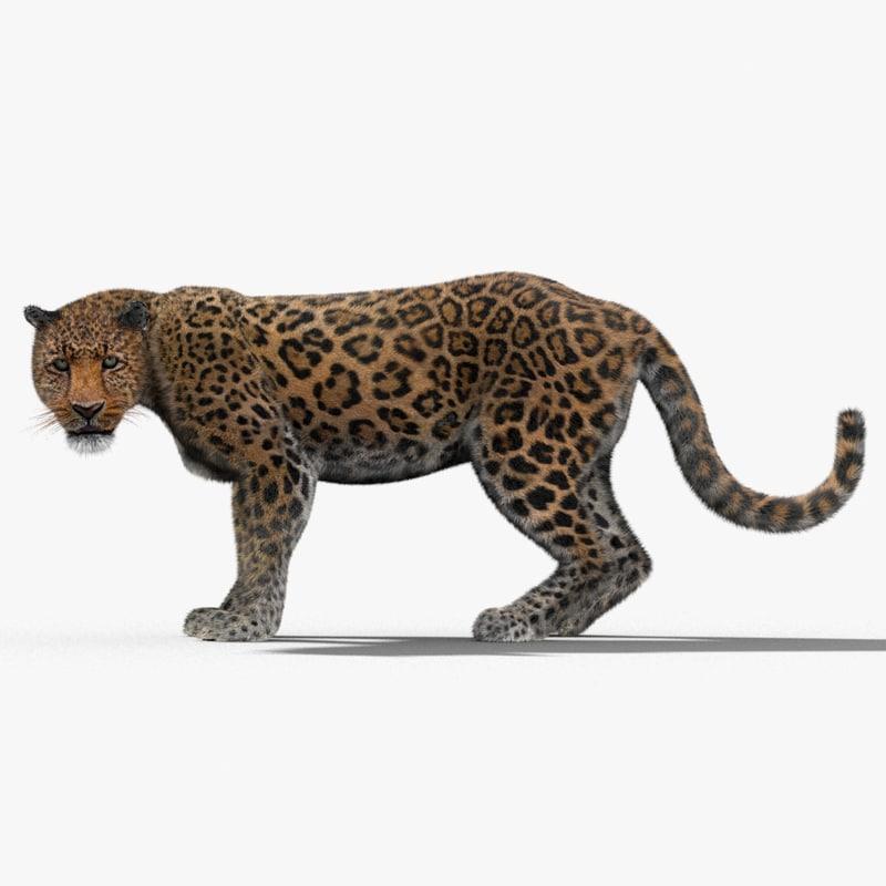 Leopard-3D-model-rigged-fur-00.jpg