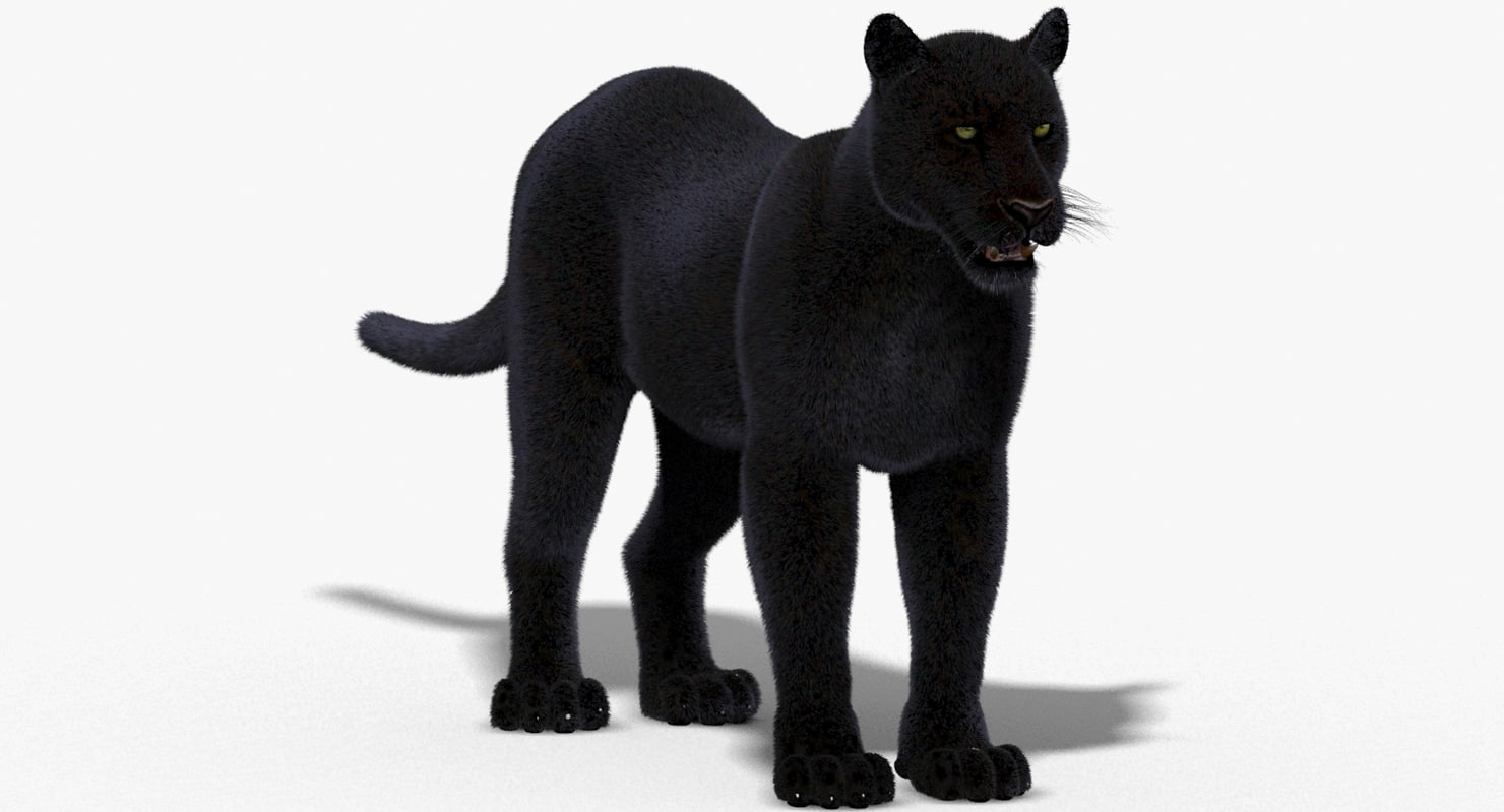 Panther-3D-model-02.jpg