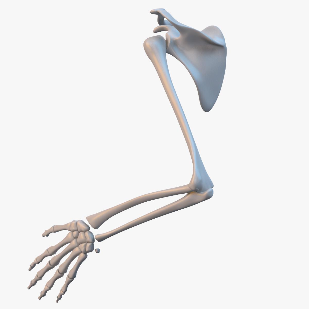 Hand Skeleton_sig_fra25_col_v01.png