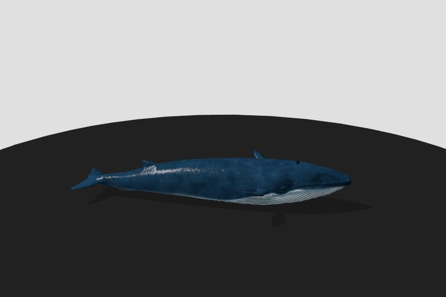 Blue Whale Low Poly