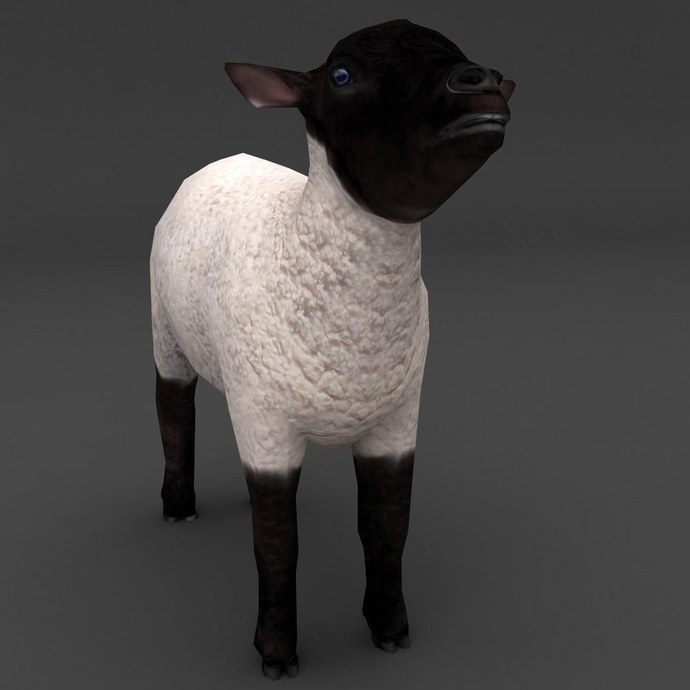Lamb Black Face lowpoly