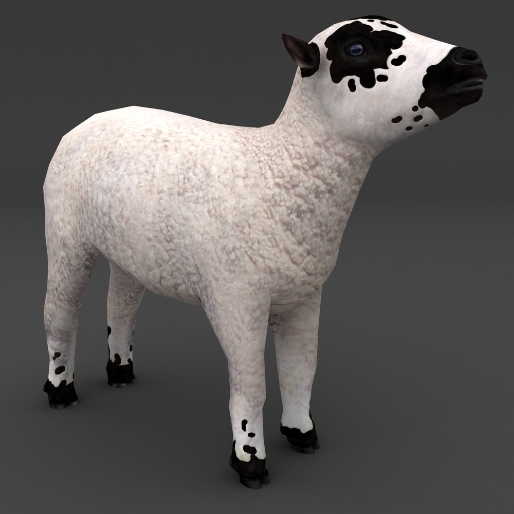 lamb patch face lowpoly