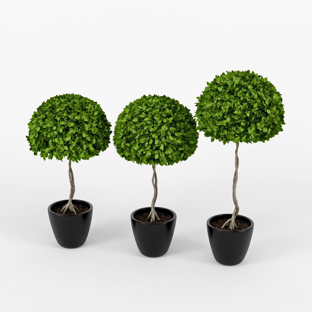 three plants_06.jpg
