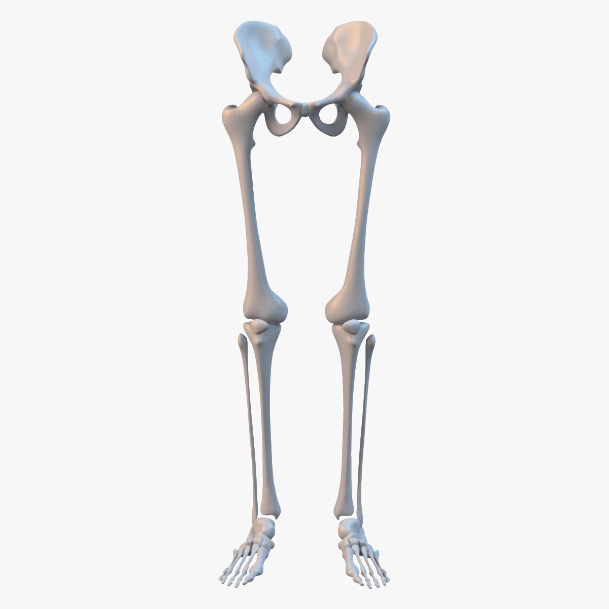 Leg Skeleton_sig_fra03_col_v03.png