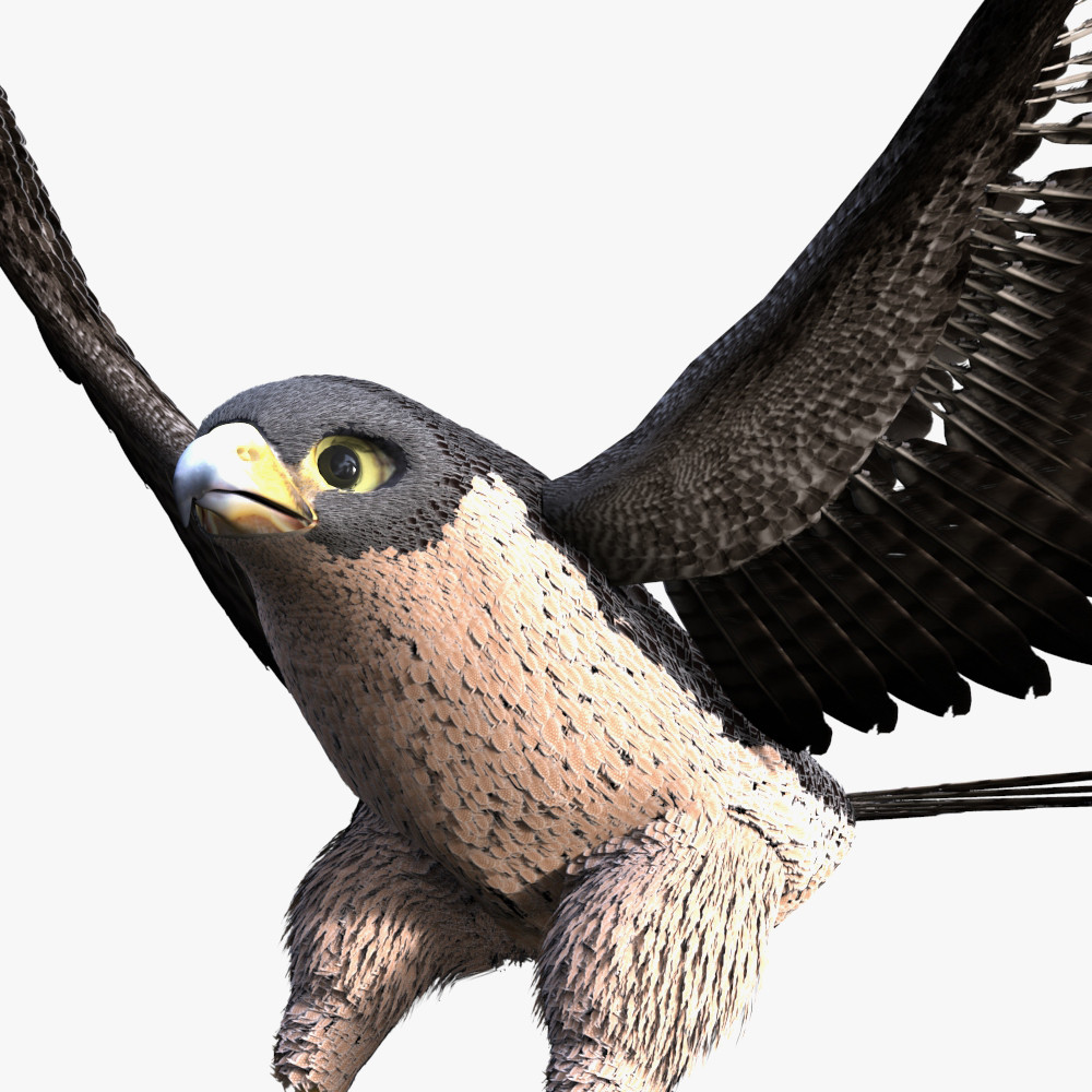 falcon.279.jpg