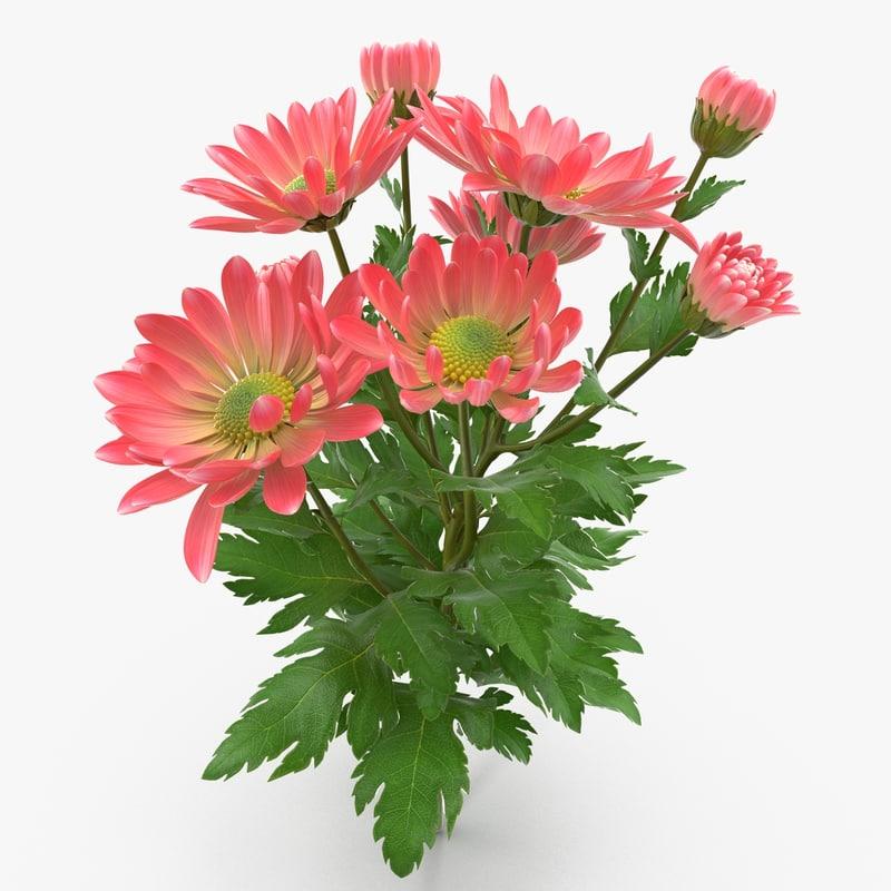 chrysanthemum3_1_1.jpg