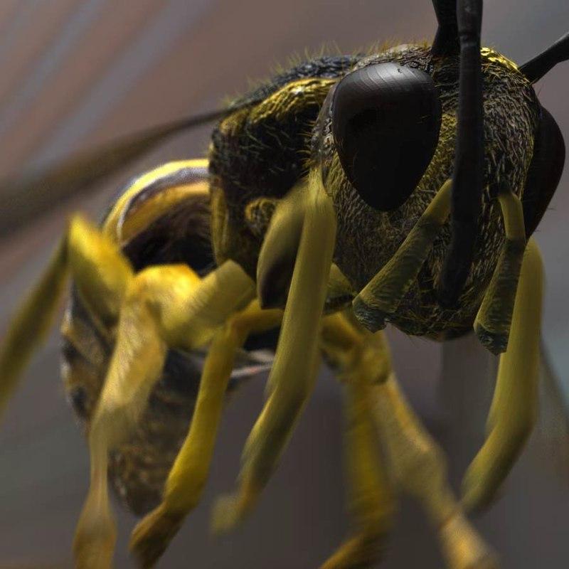Wasp.1_00000.jpg
