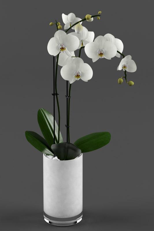 White orchid 1.jpg