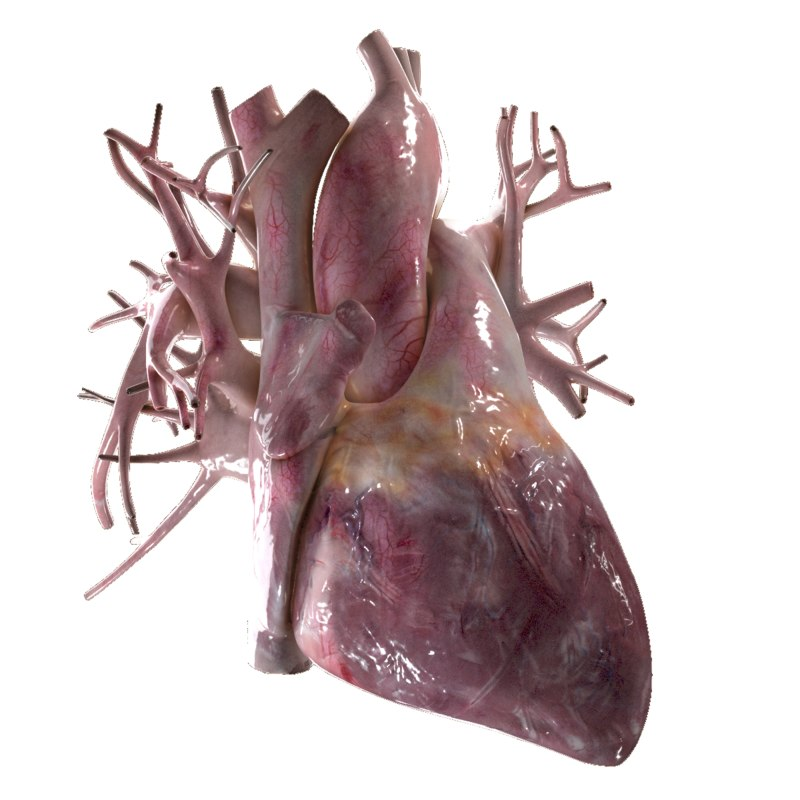 real human heart beating - photo #14