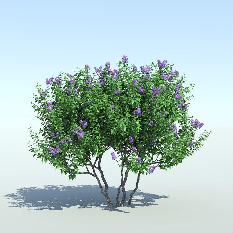 Lilac Tree (3 items)