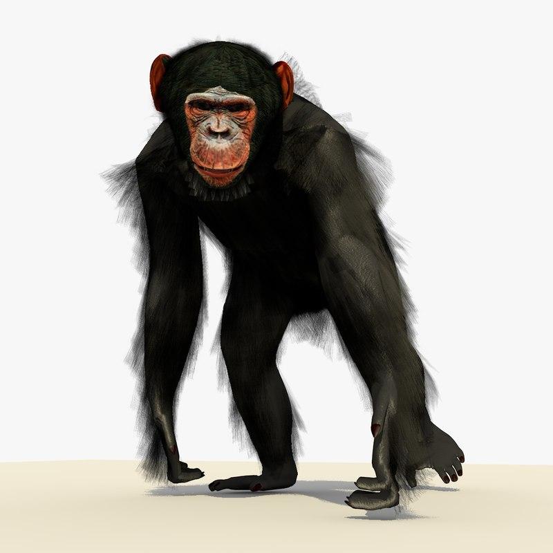 Chimp Walking Pose With (FUR)