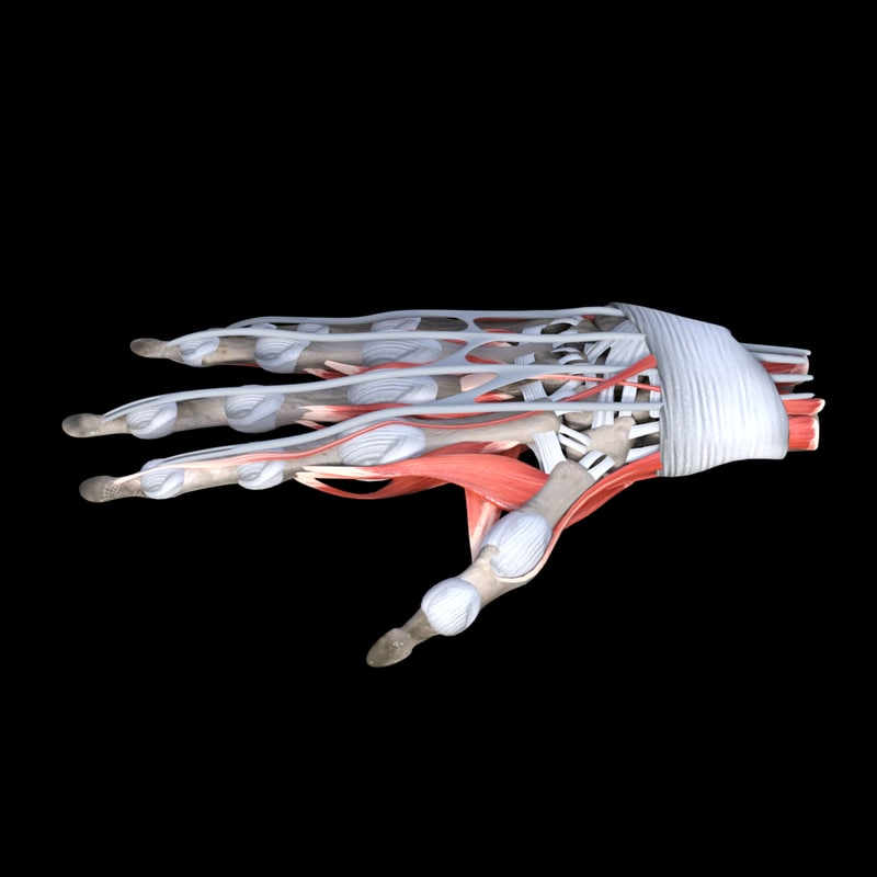 Hand1_NC.png