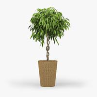 Ficus 3D models