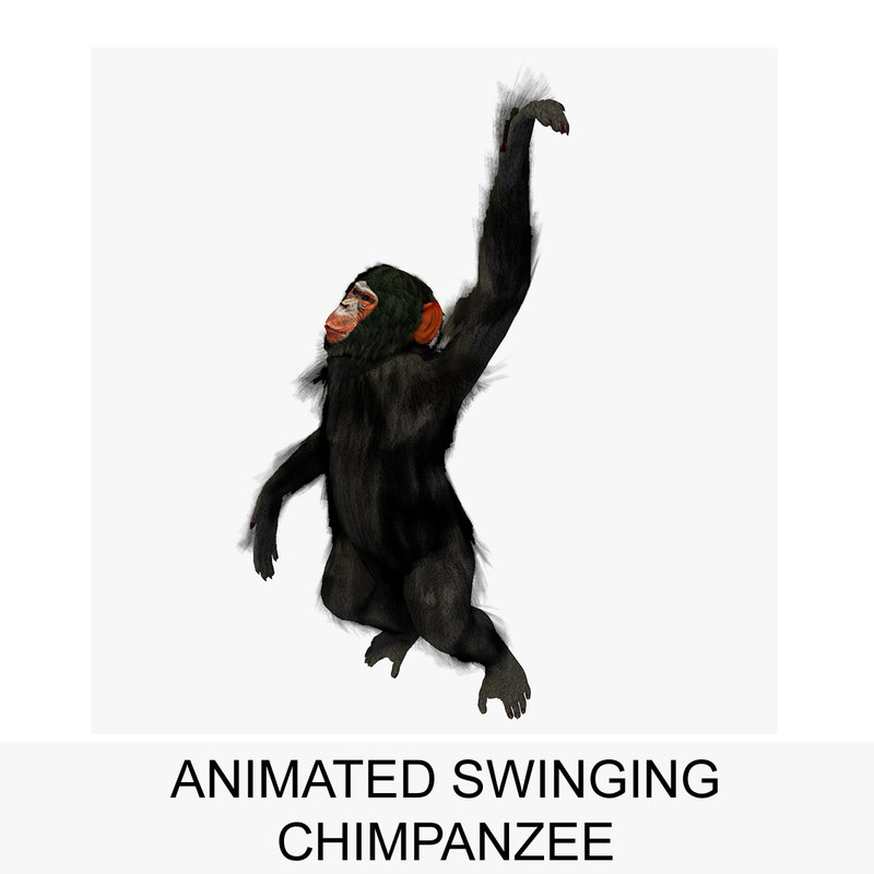 3d rigged chimpanzee swinging animation model