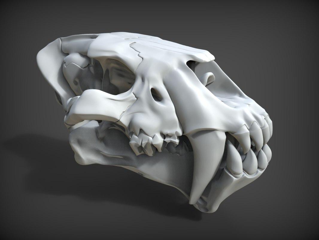 Homotherium skull