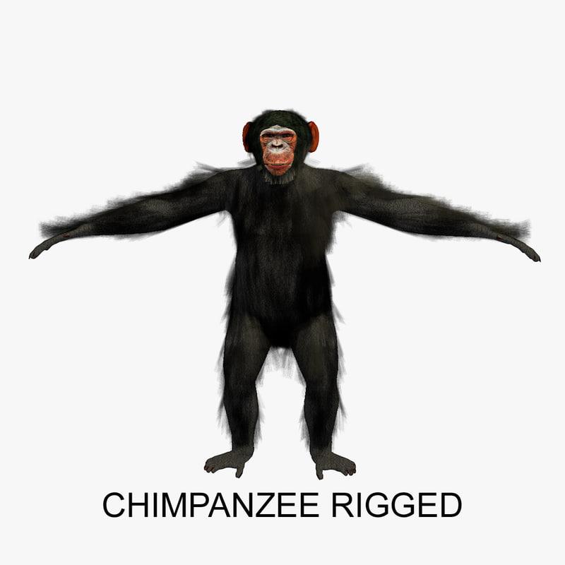 Chimpanzee Rigged