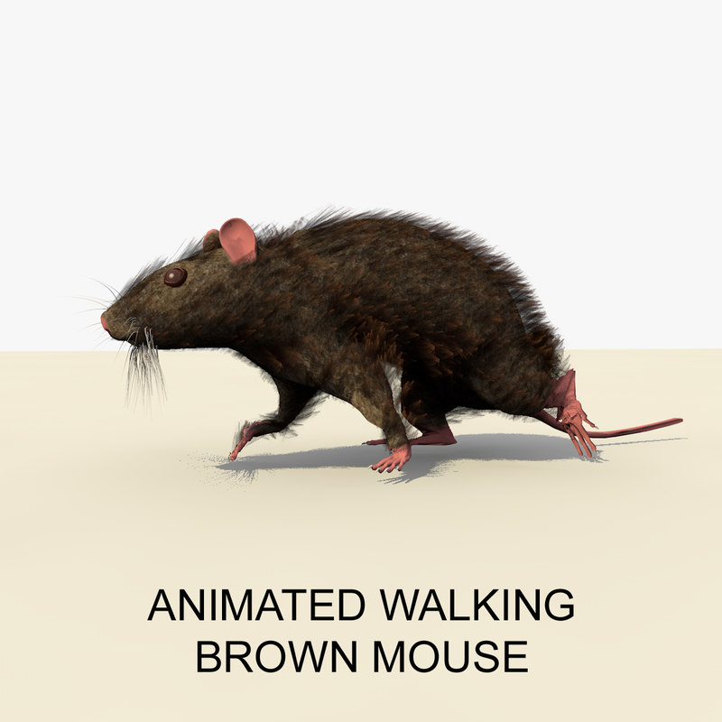 WALKING BROWN MOUSE FRONT PAGE.jpg