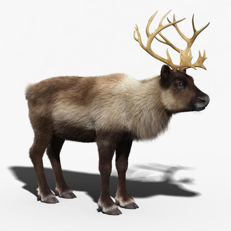 reindeer_FUR_01.jpg