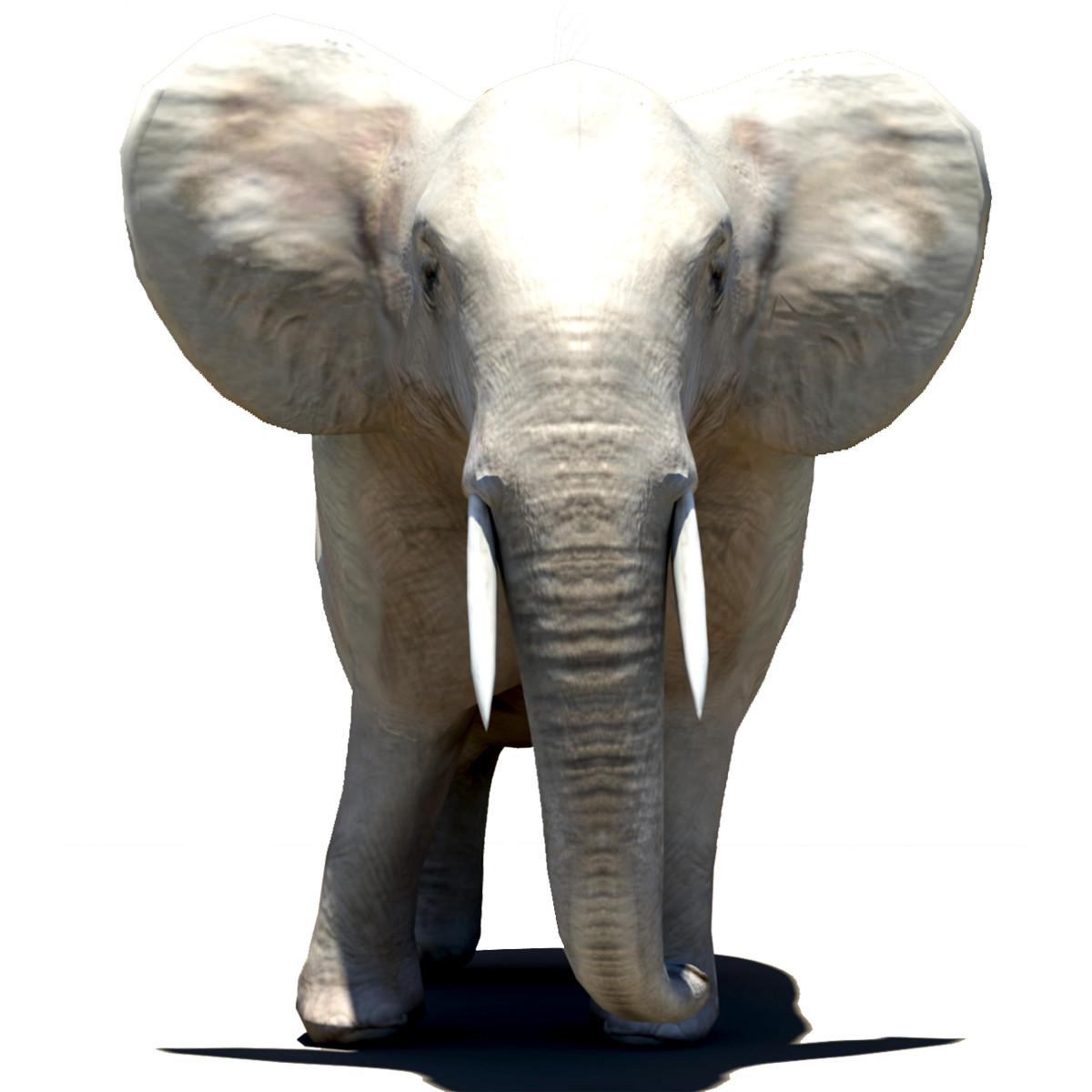 African Elephant Thumbnail.jpg