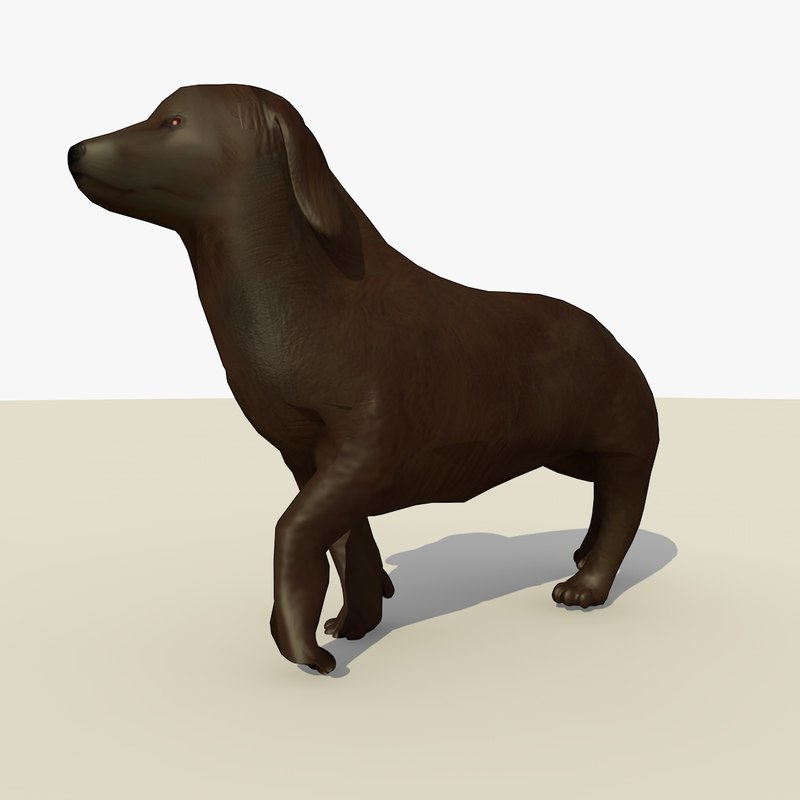 chocolate retriever dog animations 3d c4d