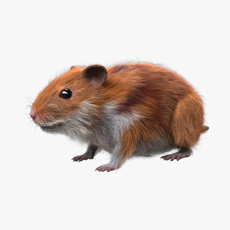 HamsterFur_01_COL.jpg