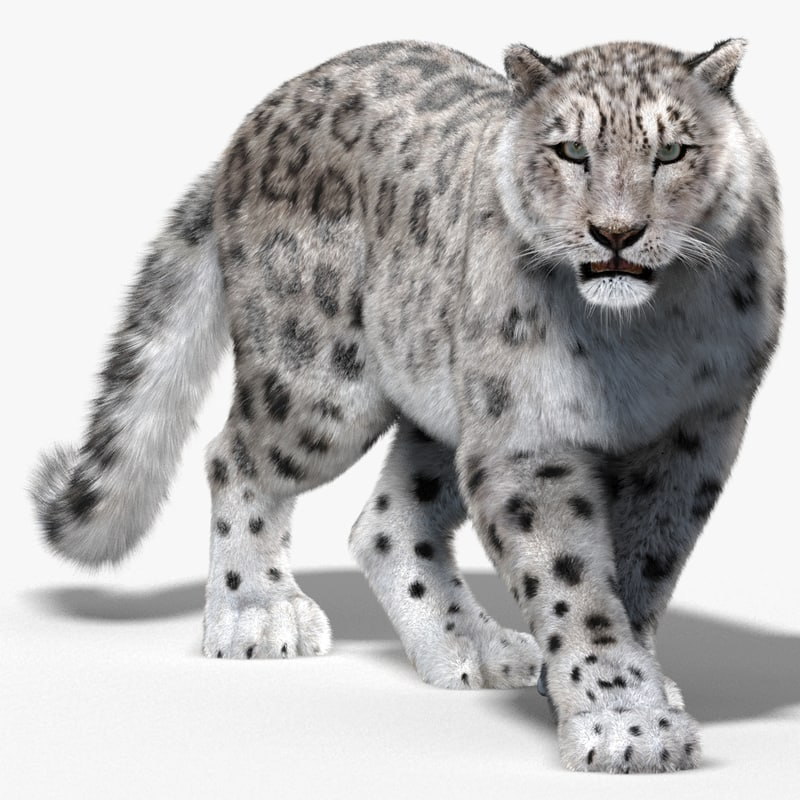 Snow-Leopard-3D-model-animated-fur-01.jpg