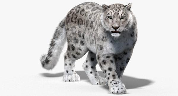 Snow Leopard (Fur, Animated) 3D Models