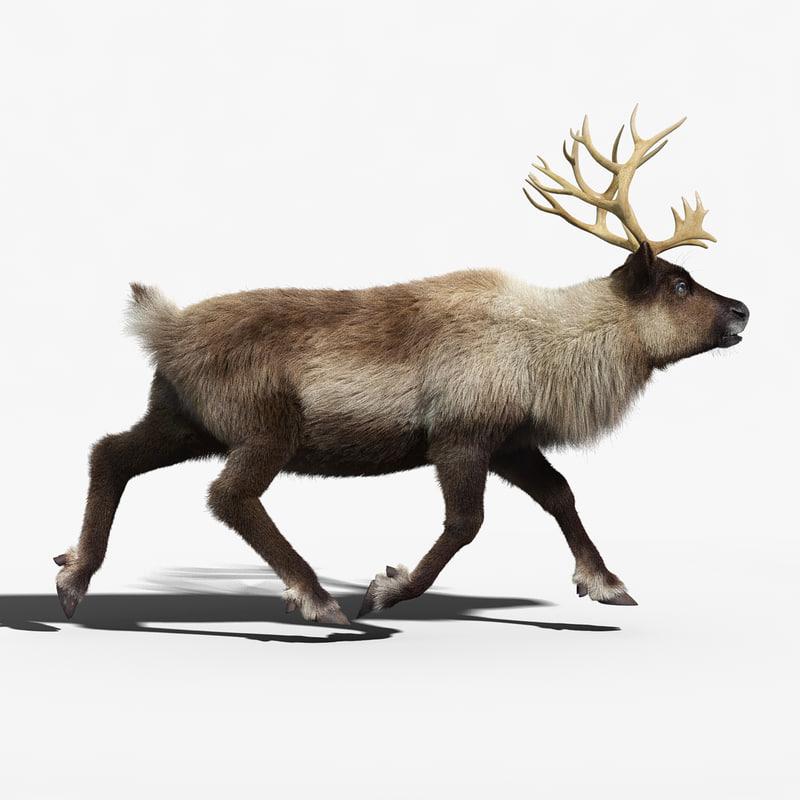 reindeer_FUR_RIGGED_02.jpg
