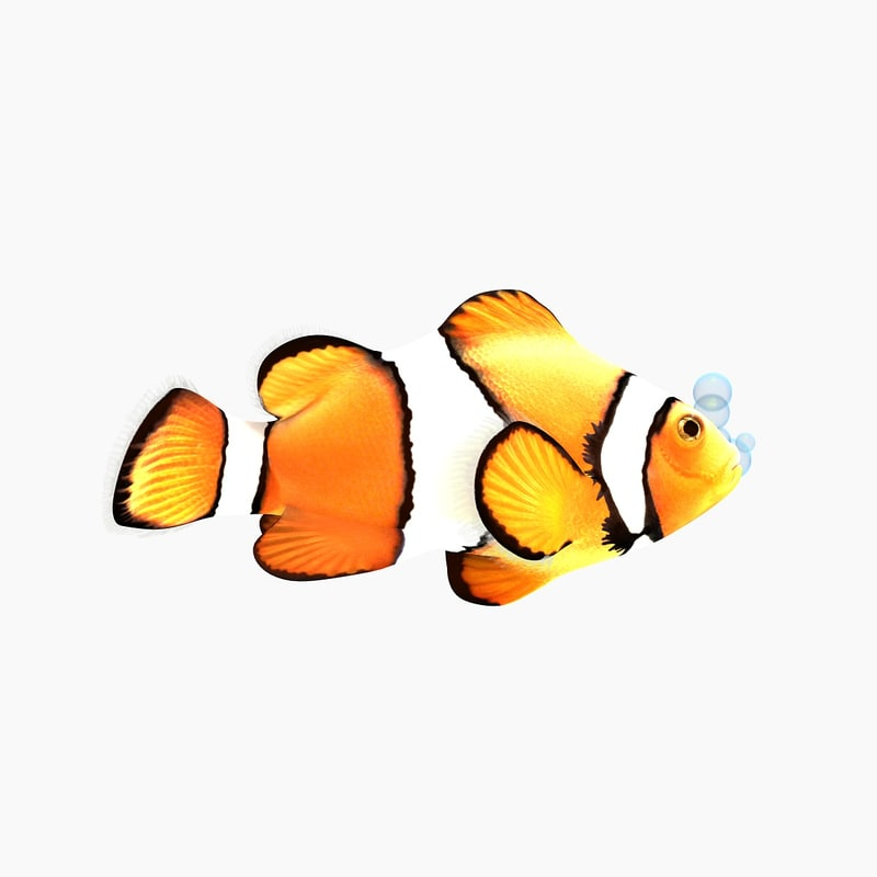 Clownfish Cartoon Character
