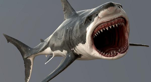 Great White Shark 3D Models