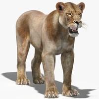 lioness 3D models