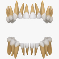 tooth 3D models