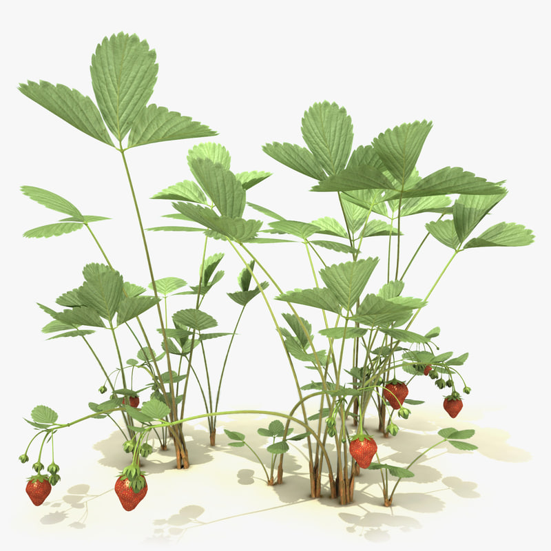 garden_strawberry_000_sign.jpg